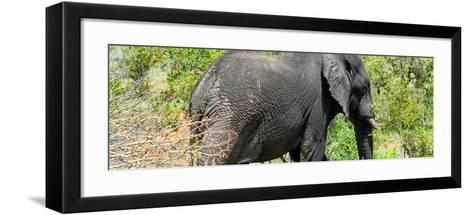 Awesome South Africa Collection Panoramic - Elephant-Philippe Hugonnard-Framed Art Print