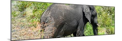 Awesome South Africa Collection Panoramic - Elephant-Philippe Hugonnard-Mounted Photographic Print