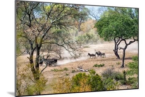 Awesome South Africa Collection - Zebras Migration in Savanna-Philippe Hugonnard-Mounted Photographic Print