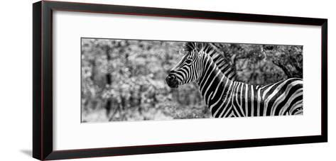 Awesome South Africa Collection Panoramic - Close-Up of Zebra B&W-Philippe Hugonnard-Framed Art Print