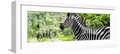 Awesome South Africa Collection Panoramic - Close-Up of Zebra-Philippe Hugonnard-Framed Art Print