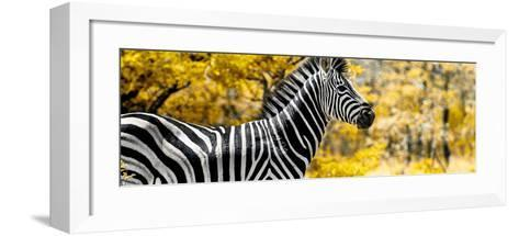 Awesome South Africa Collection Panoramic - Close-Up of Zebra with Yellow Savanna-Philippe Hugonnard-Framed Art Print