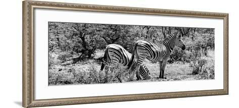 Awesome South Africa Collection Panoramic - Zebras Africa B&W-Philippe Hugonnard-Framed Art Print