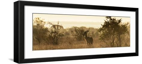 Awesome South Africa Collection Panoramic - Impala Sunrise-Philippe Hugonnard-Framed Art Print