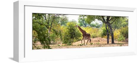 Awesome South Africa Collection Panoramic - Giraffe in the Savanna-Philippe Hugonnard-Framed Art Print