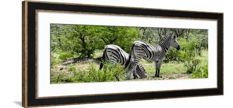Awesome South Africa Collection Panoramic - Zebras Africa-Philippe Hugonnard-Framed Art Print