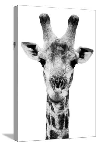 Safari Profile Collection - Portrait of Giraffe White Edition V-Philippe Hugonnard-Stretched Canvas Print
