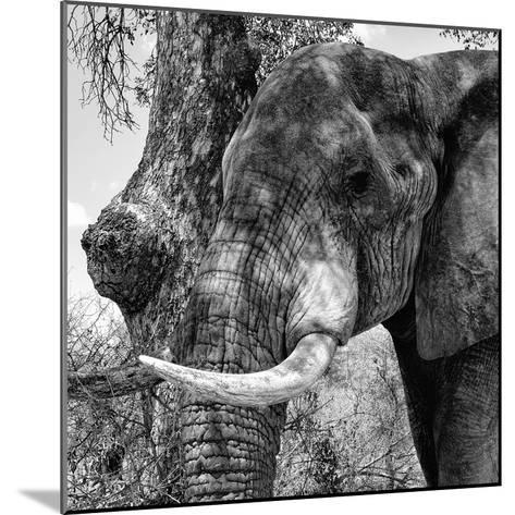 Awesome South Africa Collection Square - Close-Up of Elephant B&W-Philippe Hugonnard-Mounted Photographic Print