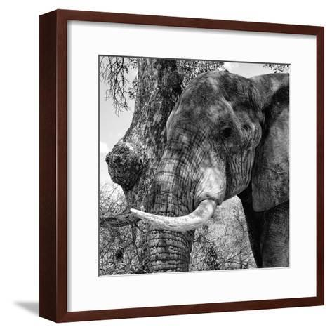 Awesome South Africa Collection Square - Close-Up of Elephant B&W-Philippe Hugonnard-Framed Art Print