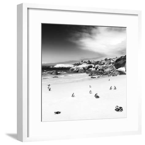 Awesome South Africa Collection Square - Colony of Penguins B&W-Philippe Hugonnard-Framed Art Print