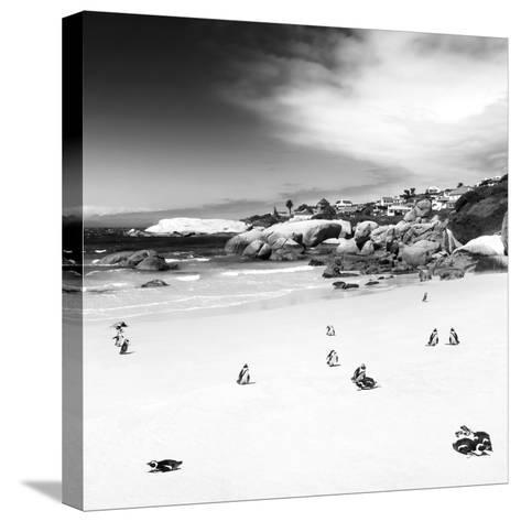 Awesome South Africa Collection Square - Colony of Penguins B&W-Philippe Hugonnard-Stretched Canvas Print