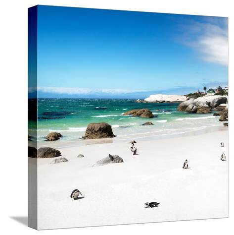 Awesome South Africa Collection Square - Colony of Penguins II-Philippe Hugonnard-Stretched Canvas Print