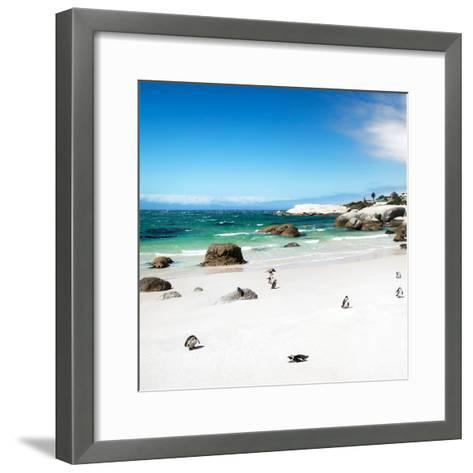 Awesome South Africa Collection Square - Colony of Penguins II-Philippe Hugonnard-Framed Art Print