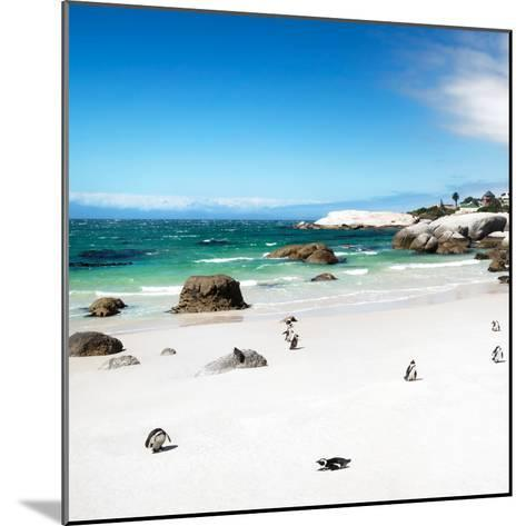 Awesome South Africa Collection Square - Colony of Penguins II-Philippe Hugonnard-Mounted Photographic Print