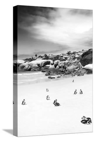 Awesome South Africa Collection B&W - African Penguins at Foxi Beach II-Philippe Hugonnard-Stretched Canvas Print