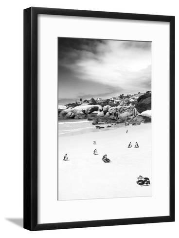 Awesome South Africa Collection B&W - African Penguins at Foxi Beach II-Philippe Hugonnard-Framed Art Print