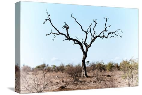 Awesome South Africa Collection - Savanna Tree VIII-Philippe Hugonnard-Stretched Canvas Print