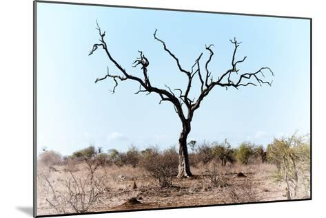 Awesome South Africa Collection - Savanna Tree VIII-Philippe Hugonnard-Mounted Photographic Print