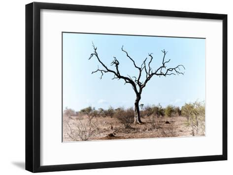 Awesome South Africa Collection - Savanna Tree VIII-Philippe Hugonnard-Framed Art Print