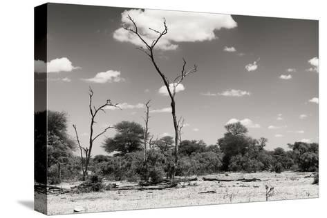 Awesome South Africa Collection B&W - African Savannah Landscape II-Philippe Hugonnard-Stretched Canvas Print