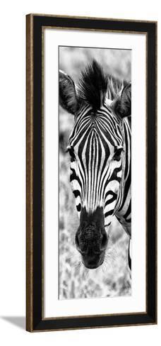 Awesome South Africa Collection Panoramic - Close-up Zebra Portrait B&W-Philippe Hugonnard-Framed Art Print