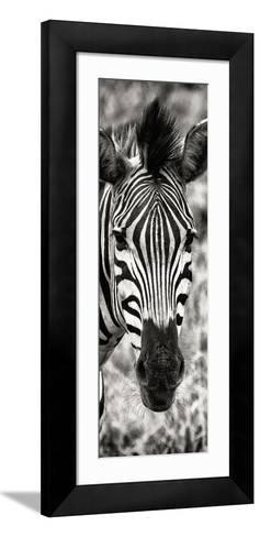 Awesome South Africa Collection Panoramic - Close-up Zebra Portrait II-Philippe Hugonnard-Framed Art Print