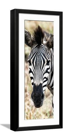 Awesome South Africa Collection Panoramic - Close-up Zebra Portrait-Philippe Hugonnard-Framed Art Print