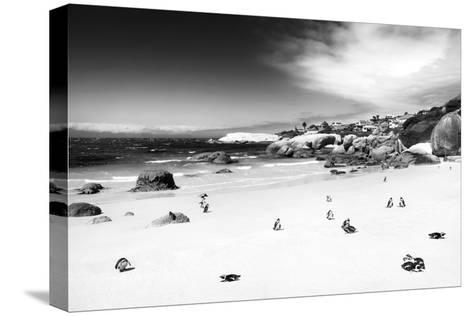 Awesome South Africa Collection B&W - African Penguins at Foxi Beach-Philippe Hugonnard-Stretched Canvas Print