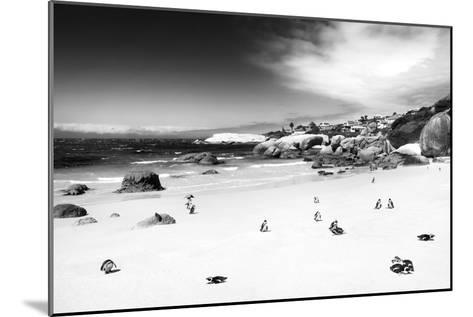 Awesome South Africa Collection B&W - African Penguins at Foxi Beach-Philippe Hugonnard-Mounted Photographic Print