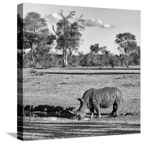 Awesome South Africa Collection Square - Rhinoceros in Savanna Landscape-Philippe Hugonnard-Stretched Canvas Print