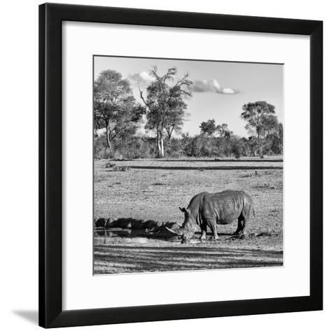 Awesome South Africa Collection Square - Rhinoceros in Savanna Landscape-Philippe Hugonnard-Framed Art Print