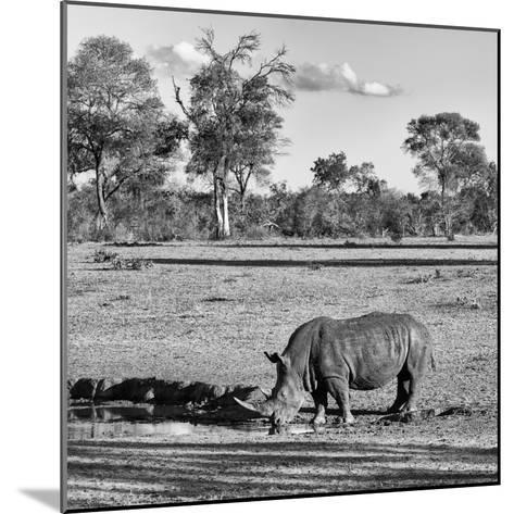 Awesome South Africa Collection Square - Rhinoceros in Savanna Landscape-Philippe Hugonnard-Mounted Photographic Print