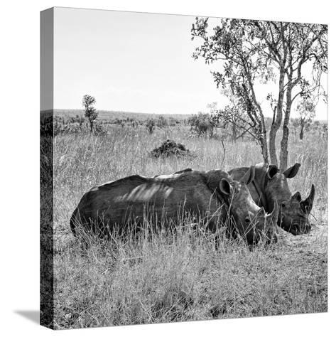 Awesome South Africa Collection Square - Two Rhinoceros sleeping B&W-Philippe Hugonnard-Stretched Canvas Print