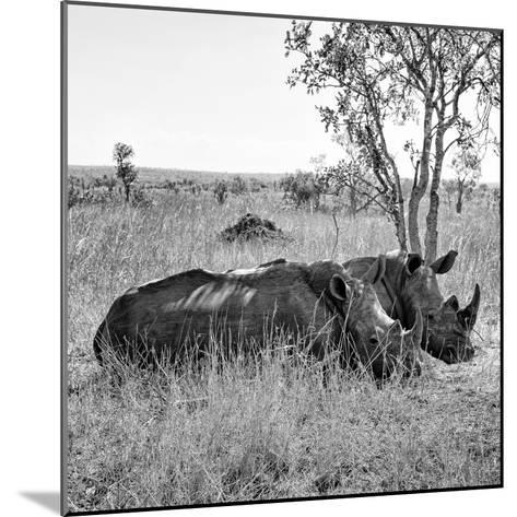 Awesome South Africa Collection Square - Two Rhinoceros sleeping B&W-Philippe Hugonnard-Mounted Photographic Print