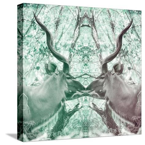 Awesome South Africa Collection Square - Reflection of Greater Kudu - Coral Green & Dimgray-Philippe Hugonnard-Stretched Canvas Print