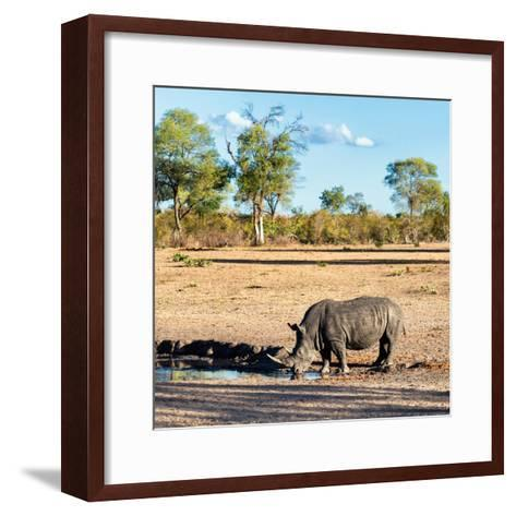 Awesome South Africa Collection Square - Rhinoceros in Savanna Landscape at Sunset-Philippe Hugonnard-Framed Art Print