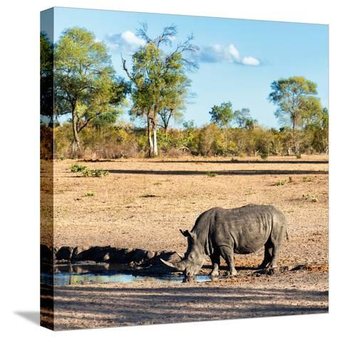 Awesome South Africa Collection Square - Rhinoceros in Savanna Landscape at Sunset-Philippe Hugonnard-Stretched Canvas Print