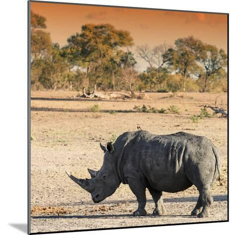 Awesome South Africa Collection Square - Rhinoceros in Savanna at Sunset-Philippe Hugonnard-Mounted Photographic Print