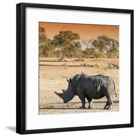 Awesome South Africa Collection Square - Rhinoceros in Savanna at Sunset-Philippe Hugonnard-Framed Art Print