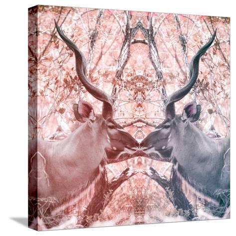 Awesome South Africa Collection Square - Reflection of Greater Kudu - Red & Dimgray-Philippe Hugonnard-Stretched Canvas Print