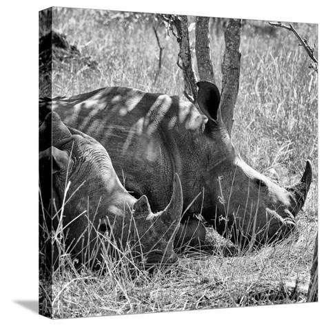 Awesome South Africa Collection Square - Two White Rhinos B&W-Philippe Hugonnard-Stretched Canvas Print