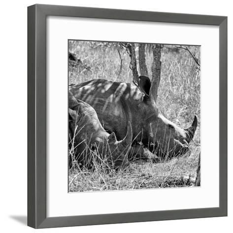 Awesome South Africa Collection Square - Two White Rhinos B&W-Philippe Hugonnard-Framed Art Print