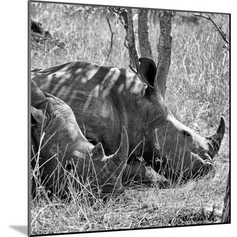 Awesome South Africa Collection Square - Two White Rhinos B&W-Philippe Hugonnard-Mounted Photographic Print