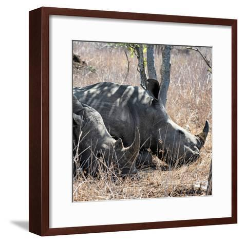 Awesome South Africa Collection Square - Two White Rhinos-Philippe Hugonnard-Framed Art Print