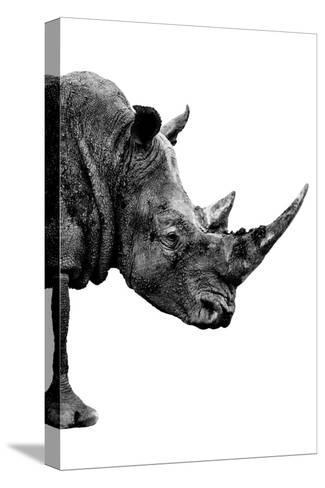 Safari Profile Collection - Rhino White Edition IV-Philippe Hugonnard-Stretched Canvas Print