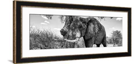 Awesome South Africa Collection Panoramic - Male African Elephant B&W-Philippe Hugonnard-Framed Art Print