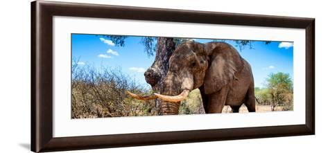 Awesome South Africa Collection Panoramic - Male African Elephant-Philippe Hugonnard-Framed Art Print