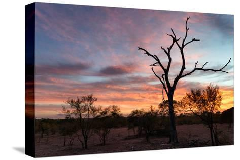 Awesome South Africa Collection - Savanna Trees at Sunrise-Philippe Hugonnard-Stretched Canvas Print