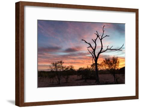 Awesome South Africa Collection - Savanna Trees at Sunrise-Philippe Hugonnard-Framed Art Print