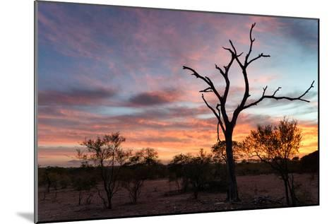 Awesome South Africa Collection - Savanna Trees at Sunrise-Philippe Hugonnard-Mounted Photographic Print